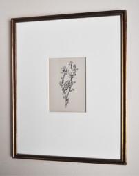 Paul Klee, Lithografie, Riesenblattlaus 1920